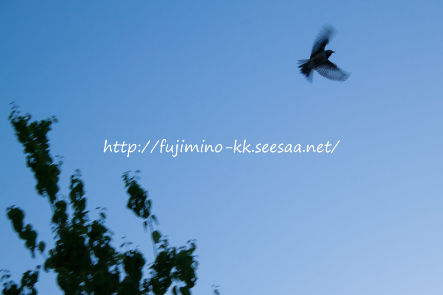 飛び立つ小鳥